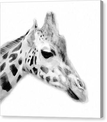 Giraffe On White Background Canvas Print by Toppart Sweden