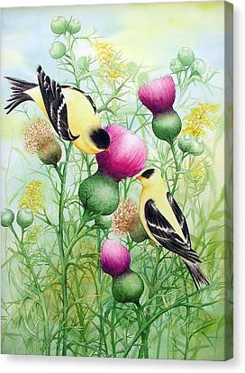 Gold Finches On Thistles Canvas Print by Johanna Axelrod