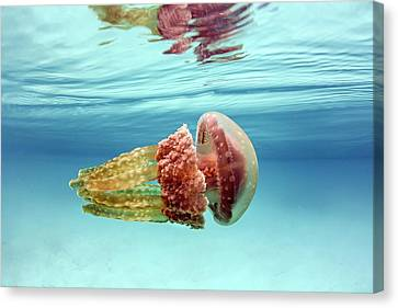 Golden Jellyfish Canvas Print by Ethan Daniels