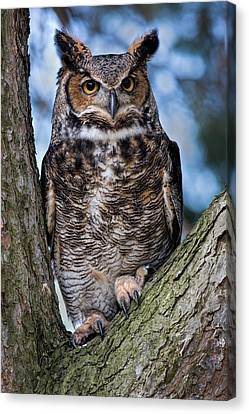 Great Horned Owl Canvas Print by Dale Kincaid