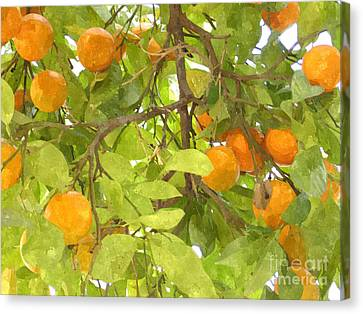 Green Leaves And Mature Oranges On The Tree Canvas Print by Lanjee Chee