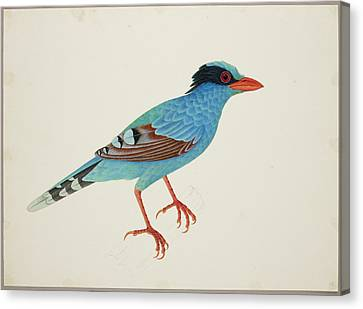 Green Magpie Canvas Print by British Library