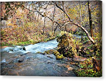Greer Spring  Canvas Print by Marty Koch