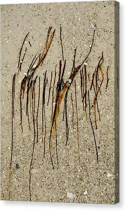 Gulf Art Canvas Print by KM Corcoran