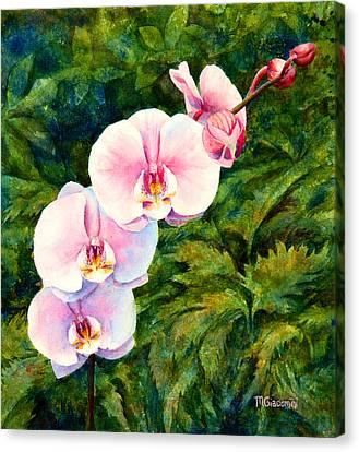 Hawaiian Orchid Canvas Print by Mary Giacomini