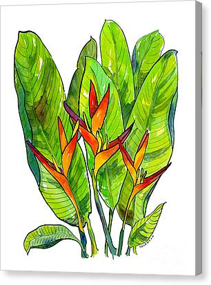 Heleconia Canvas Print by Diane Thornton