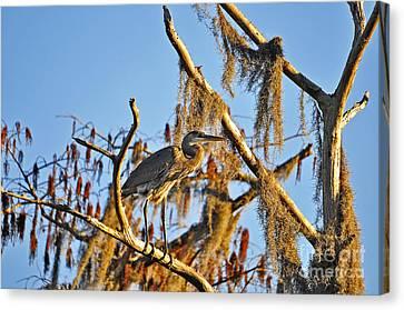 Heron On High Canvas Print by Al Powell Photography USA