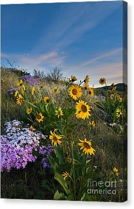 High Desert Spring Canvas Print by Mike  Dawson