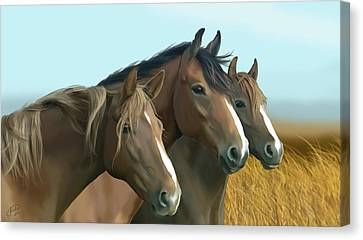 Hope Of The Mustangs Canvas Print by Kate Black