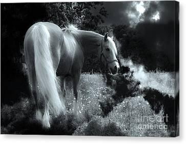 Horse Canvas Print by Christine Sponchia