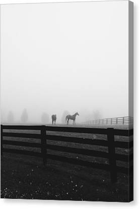 Horses In The Fall Mist Canvas Print by Jennifer Palmer