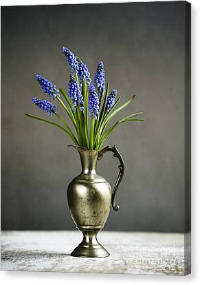 Hyacinth Still Life Canvas Print by Nailia Schwarz