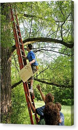Installing A Nesting Box Canvas Print by Jim West