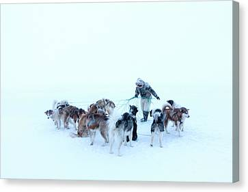 Inuit Hunter And Husky Dog Team Canvas Print by Louise Murray
