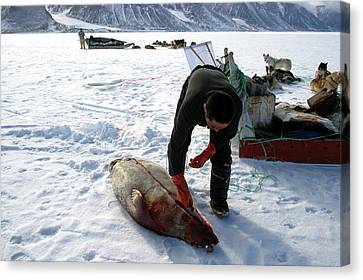 Inuit Hunter Butchering A Seal Canvas Print by Louise Murray