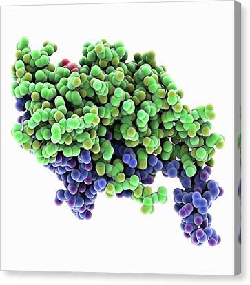 Kinesin Motor Protein Molecule Canvas Print by Laguna Design