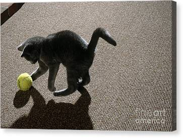 Kitten Playing With Ball Canvas Print by James L. Amos