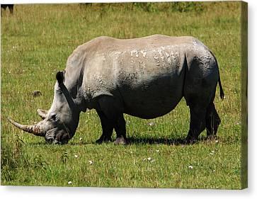 Lake Nakuru White Rhinoceros Canvas Print by Aidan Moran