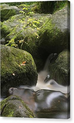 Landscape Of Becky Falls Waterfall In Dartmoor National Park Eng Canvas Print by Matthew Gibson