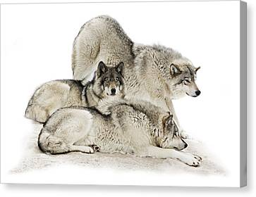 Lazy Day Wolves Canvas Print by Rudy Pohl