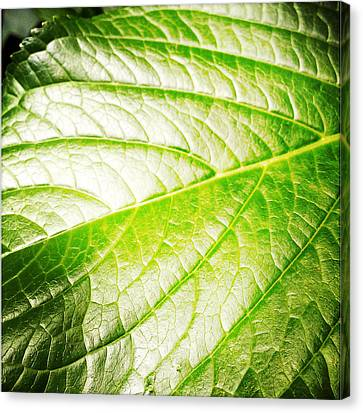 Leaf Canvas Print by Les Cunliffe