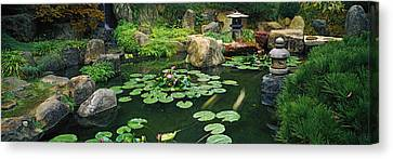Lilies In A Pond At Japanese Garden Canvas Print by Panoramic Images