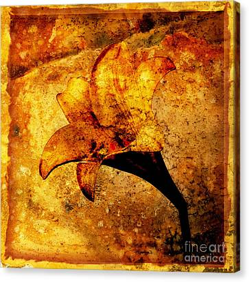 Lily Canvas Print by Bernard Jaubert