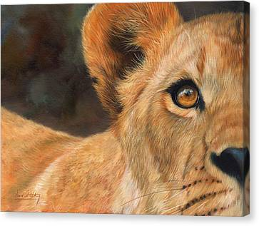 Lioness Canvas Print by David Stribbling