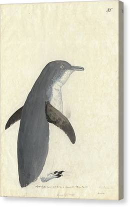Little Penguin Canvas Print by Natural History Museum, London