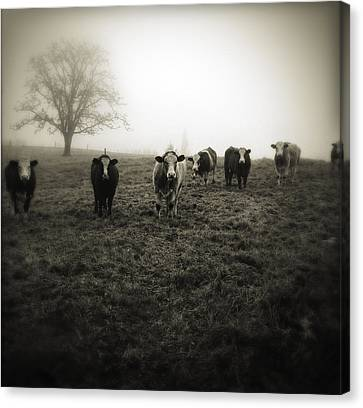 Livestock Canvas Print by Les Cunliffe