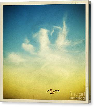 Lonely Seagull Canvas Print by Setsiri Silapasuwanchai