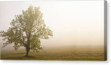 Lost In The Fog Canvas Print by Andrew Soundarajan