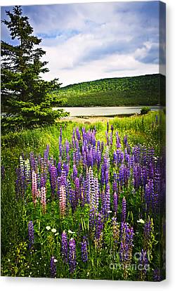 Lupin Flowers In Newfoundland Canvas Print by Elena Elisseeva