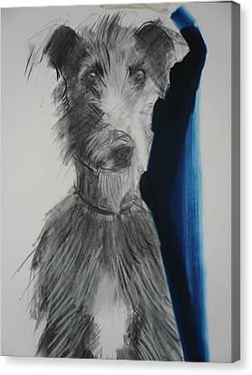 Lurcher, 2012 Charcoal And Oil On Paper Canvas Print by Sally Muir