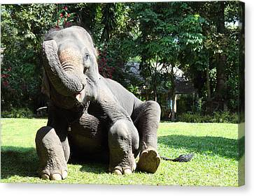 Maesa Elephant Camp - Chiang Mai Thailand - 01131 Canvas Print by DC Photographer