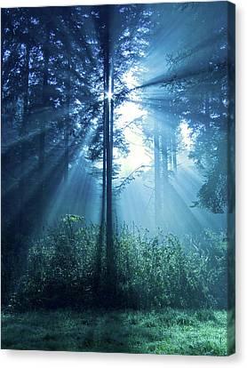 Magical Light Canvas Print by Daniel Csoka