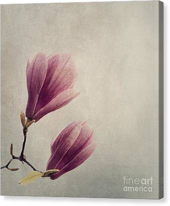 Romance Canvas Print featuring the pyrography Magnolia by Jelena Jovanovic