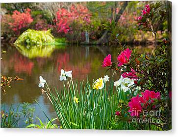 Magnolia Plantation And Gardens Canvas Print by Iris Greenwell