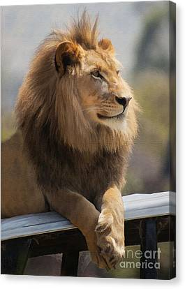 Majestic Lion Canvas Print by Sharon Foster