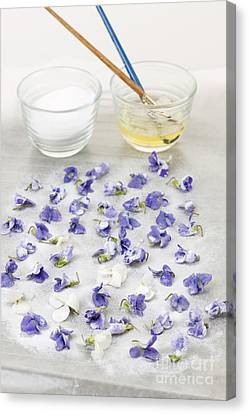 Making Candied Violets Canvas Print by Elena Elisseeva