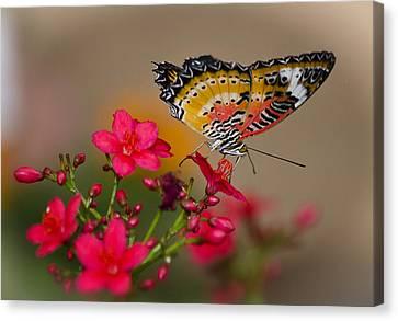 Malay Lacewing Butterfly  Canvas Print by Saija  Lehtonen