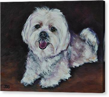 Maltese Canvas Print by Julie Dalton Gourgues