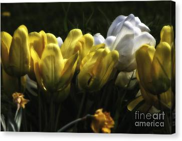 Midnight Tulips Canvas Print by Timothy J Berndt