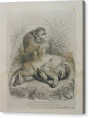 Monkeys Canvas Print by British Library