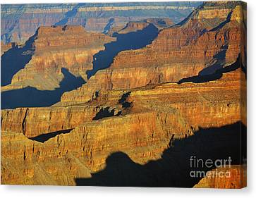 Morning Color And Shadow Play In Grand Canyon National Park Canvas Print by Shawn O'Brien