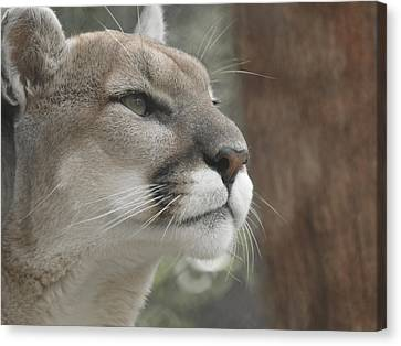 Mountain Lion Canvas Print by Ernie Echols