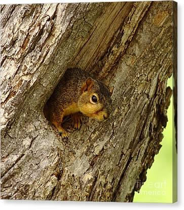 One Too Many Acorns Canvas Print by Robert Frederick