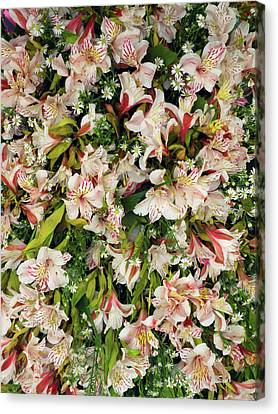 Orchids For Sale In Main Street Market Canvas Print by Panoramic Images