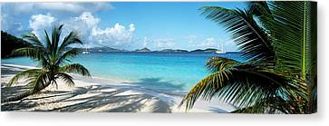 Palm Trees On The Beach, Us Virgin Canvas Print by Panoramic Images