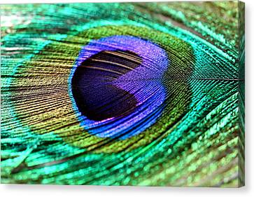 Peacock Feather Canvas Print by Heike Hultsch